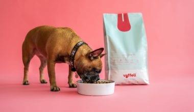 hund spiser foder fra hundeskål vuffeli