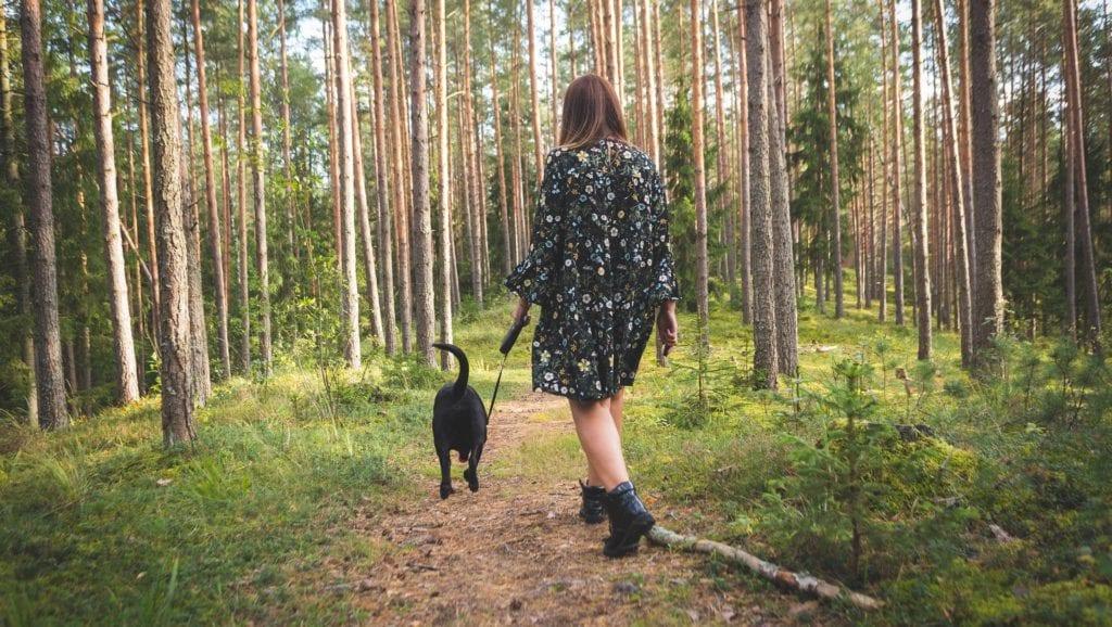 skovtur med hund i snorVuffeli hundeblog