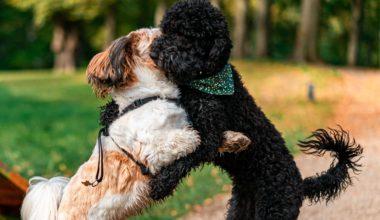 hunde der leger i parken
