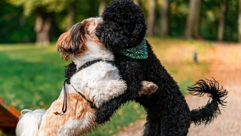 hunde der leger i parkenVuffeli hundeblog