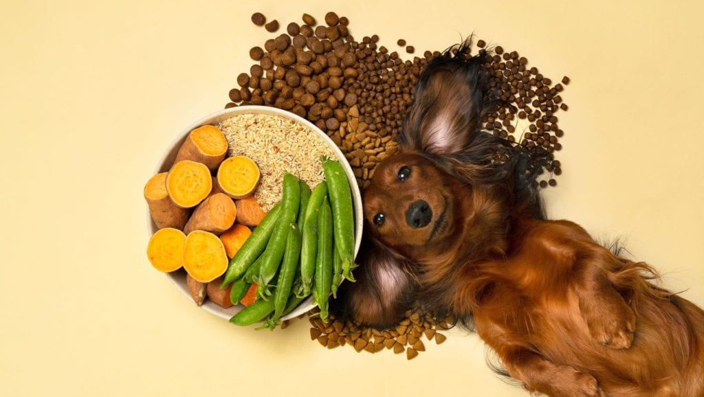 Hvilke ingredienser er der i hundefoder? | VuffeliVuffeli hundeblog