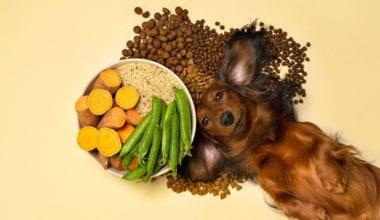 Hvilke ingredienser er der i hundefoder? | Vuffeli