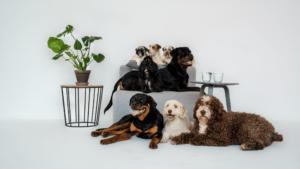 Populære planter der er giftige og farlige for hunde