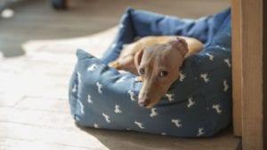 brun hund i hundekurv