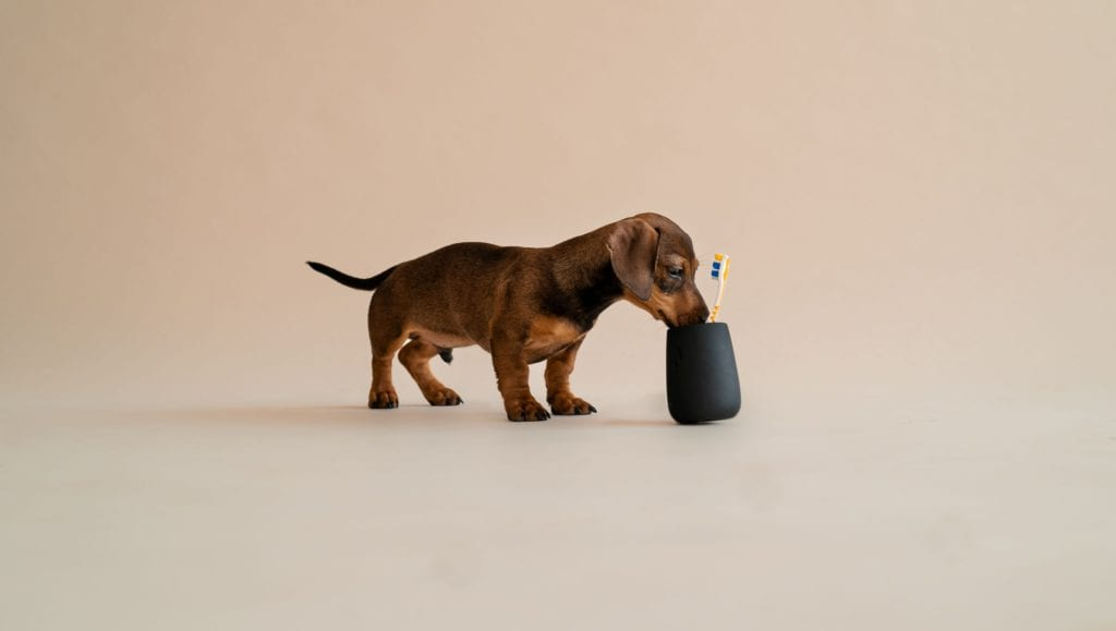 Sådan holder du din hunds tænder sunde og raske | Vuffeli