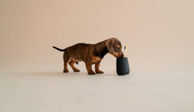 hund kigger ned i tandbørsten