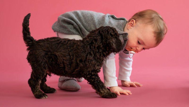 hund og babyVuffeli hundeblog