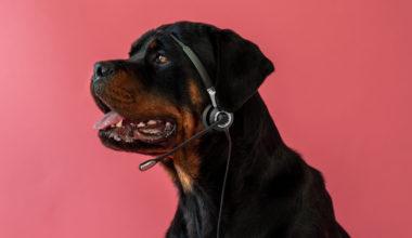 Hunde kan høre meget høje toner