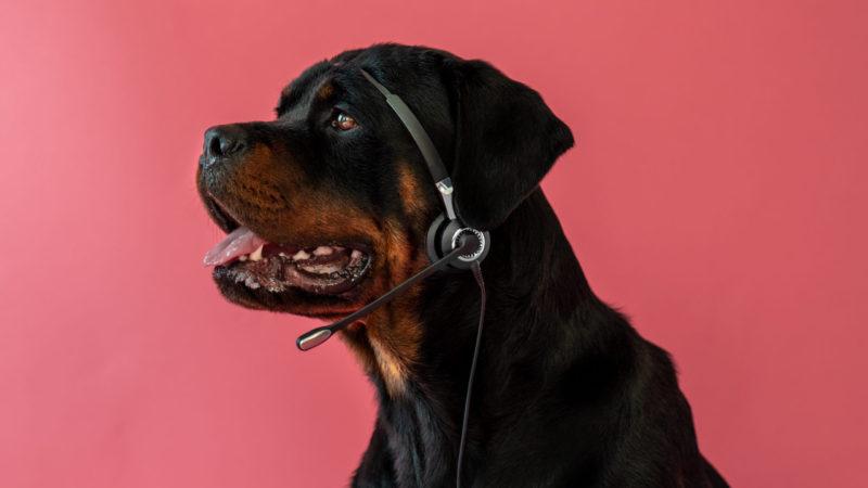 Hunde kan høre meget høje tonerVuffeli hundeblog