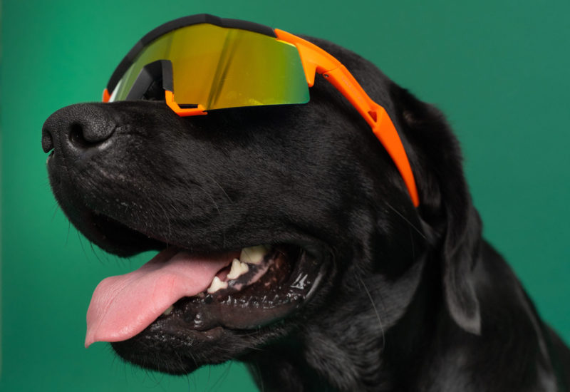 hund med solbriller påVuffeli hundeblog