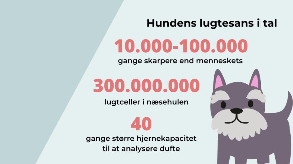 Hundens lugtesans i tal. 10000 til 100000 gange skarpere end menneskets.Vuffeli hundeblog