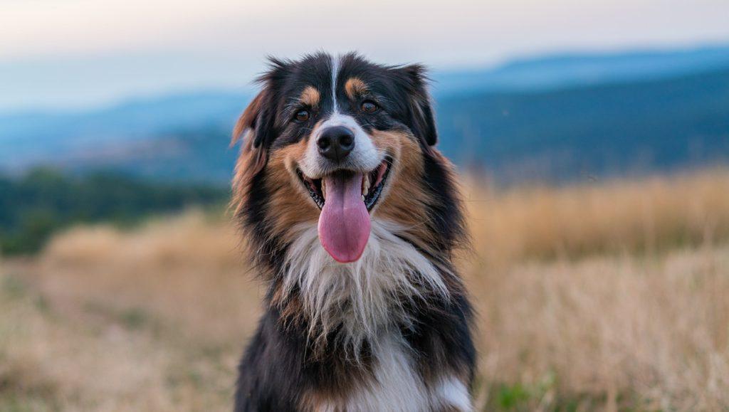 Vuffeli hundeblog